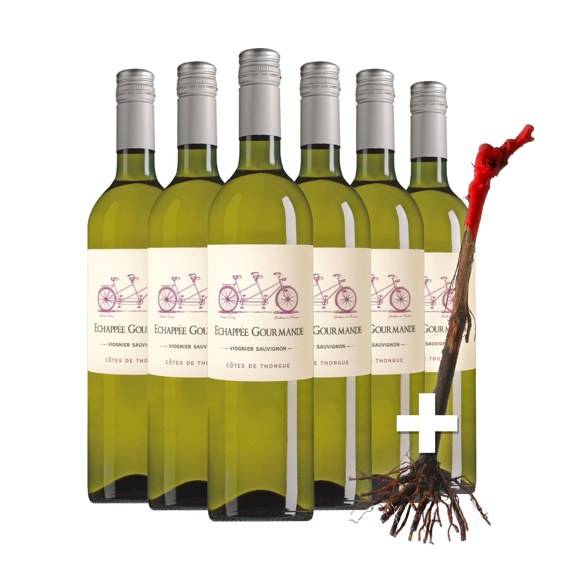Wijnpakket Échappée Gourmande Viognier Sauvignon mét gratis wijnstok - Wietzes wijn/tuintip
